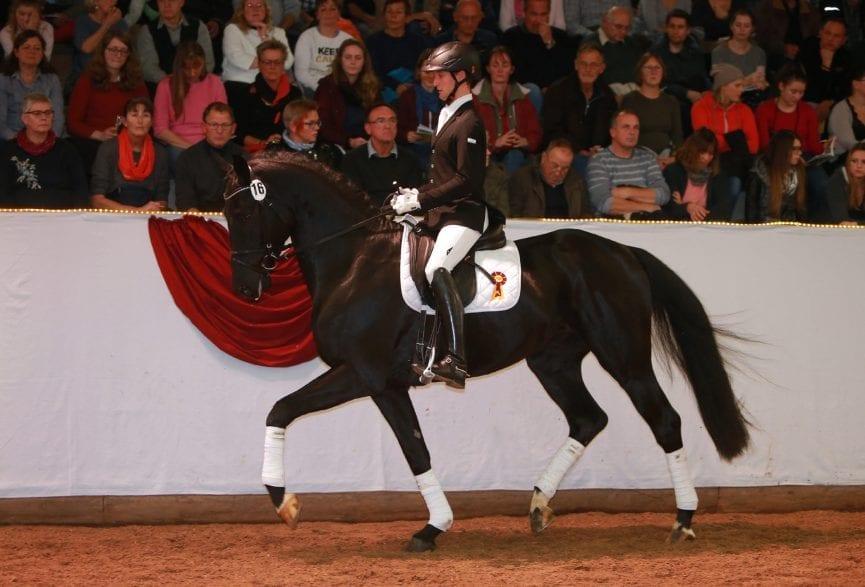 Das teuerste Pferd der Auktion: SHAOLAN von Shomari S/ Levisto aus der Zucht der ZG Schulz/ Zeulenroda (Foto: Olav Krenz)
