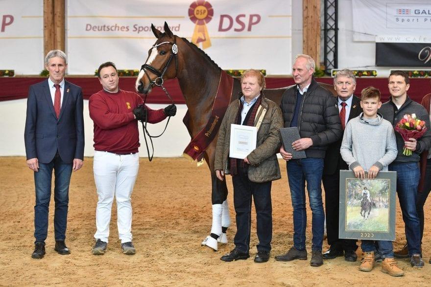 Der DSP-Siegerhengst Springen (Foto: Björn Schröder)