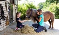 Kinder für unsere Pferde (Foto: Hellmann)