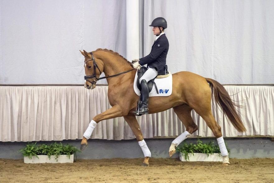Bestbezahlte Offerte der 1. Westfälischen Online Elite-Auktion war mit 121.000 Euro Bombino Bianco. Foto: Guido Recki