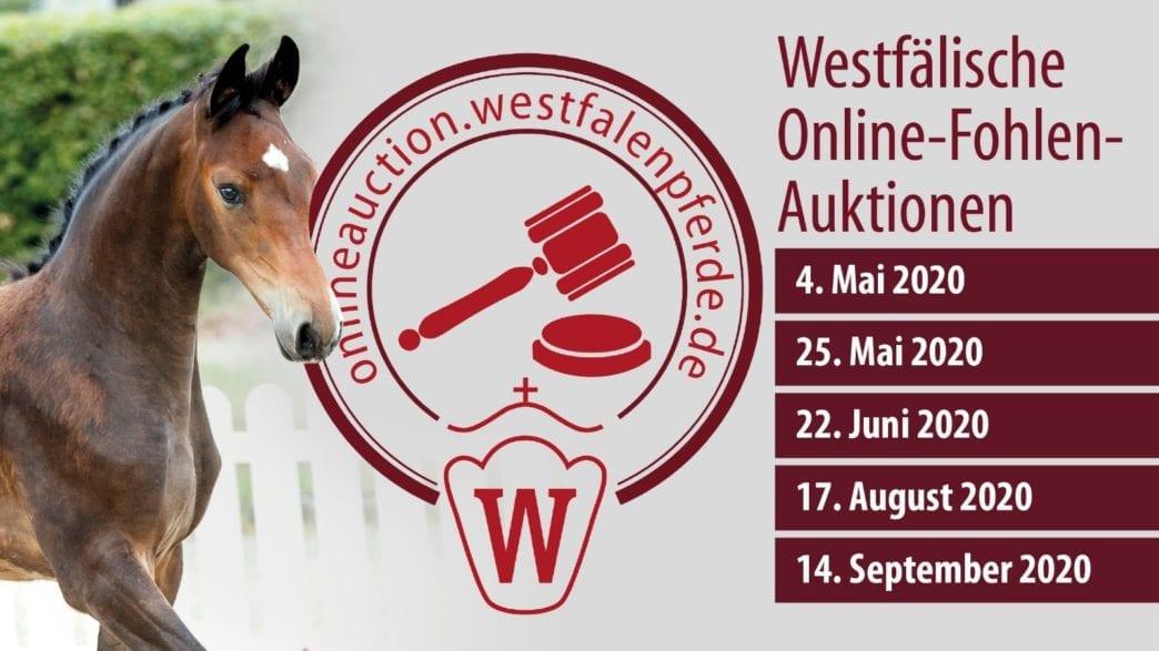 Neue Online Fohlen-Auktionstermine des Westfälischen Pferdestammbuchs.
