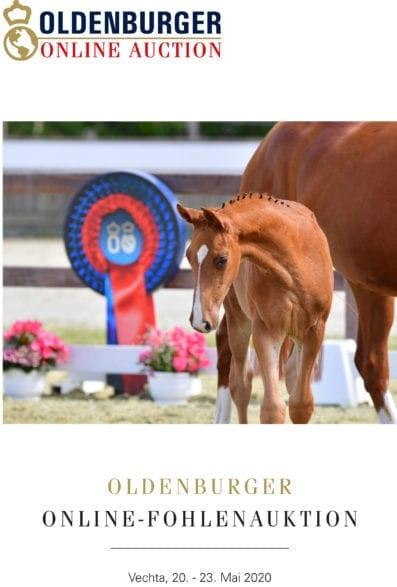 Tiel Oldenburger Online-Fohlenauktion