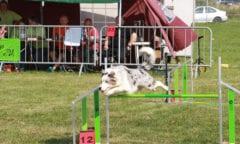Dog Agility bei der Pferd und Hund