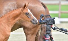 Schalten Sie ein und erleben Sie die spannenden Highlights im Oldenburger Pferde Zentrum Vechta. (gr. Feldhaus)