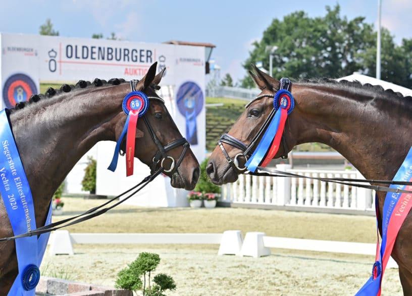 Die Siegerstuten Only you v. Ogano und Casey v. Sir Donnerhall I. (gr. Feldhaus)
