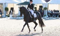 Isabell Werth und Weihegold siegen im Grand Prix (Foto: Thomas Hellmann)