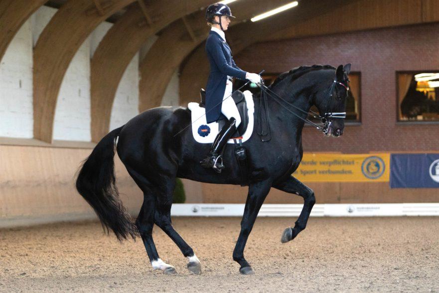 Kathleen Kröncke und San Royal gewannen in Schenefeld sowohl den Grand Prix, als auch den Special. (Foto: Tara Gottmann)