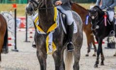 Hannoveraner Springpferdechampion Valensky wurde mit dem Stakkato-Preis ausgezeichnet. Foto: Stefan Lafrentz