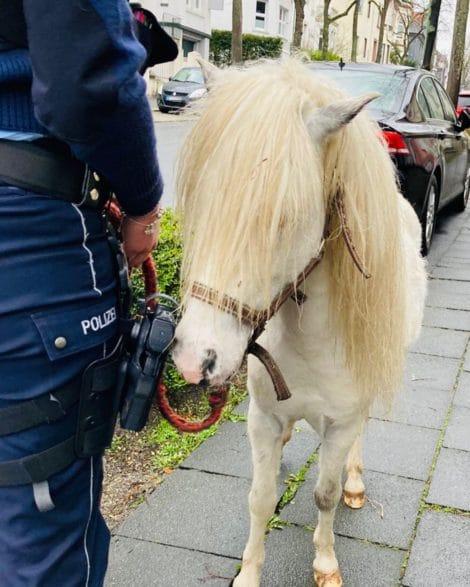 Pferd Merlin Original-Content von: Polizei Hagen, übermittelt durch news aktuell