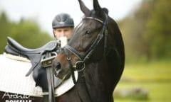 Die Pferde der Landesreitschule stehen bereit: Ab 01. März 2021 ist der Einzelunterricht wieder gestattet. (Foto: Boiselle)