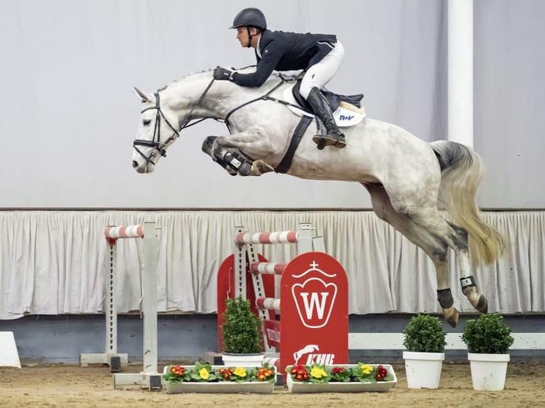 Beliebtestes Springpferd der Westfälischen Elite-Auktion: Nr. 43 Crystallized   Foto: Reckimedia