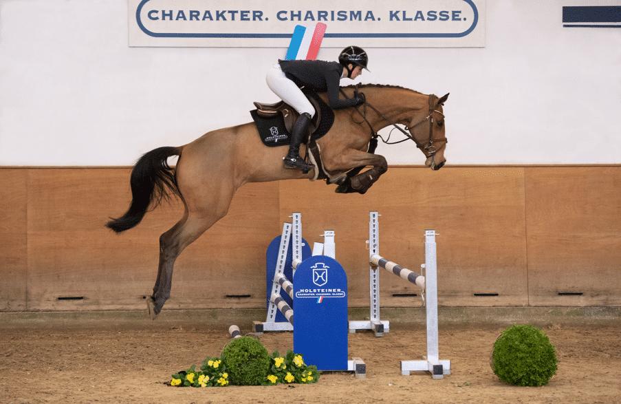 Aus der Mutterlinie von Quilea v. Quibery-Clarimo (Katalognummer 3) stammen mehrere bis 1,45 Meter-Springen erfolgreiche Sportpferde. (Foto: Janne Bugtrup)