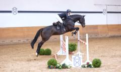 In den zusätzlich gedrehten Videos zeigen die gerittenen Auktionspferde ihr Können im Parcours. So auch Katalognummer 23, Hora v. Diarado-Calido I (Foto: Janne Bugtrup)