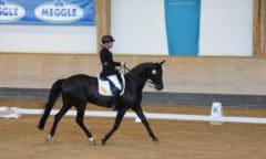 Steffen Zeibig bei den Deutschen Meisterschaften 2019 im Rahmen der Pferd International München. Foto: gr. Feldhaus