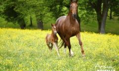 Ab 30. Mai wieder möglich: Pferdeerlebnisse nach Voranmeldung (Foto: Archiv Boiselle)