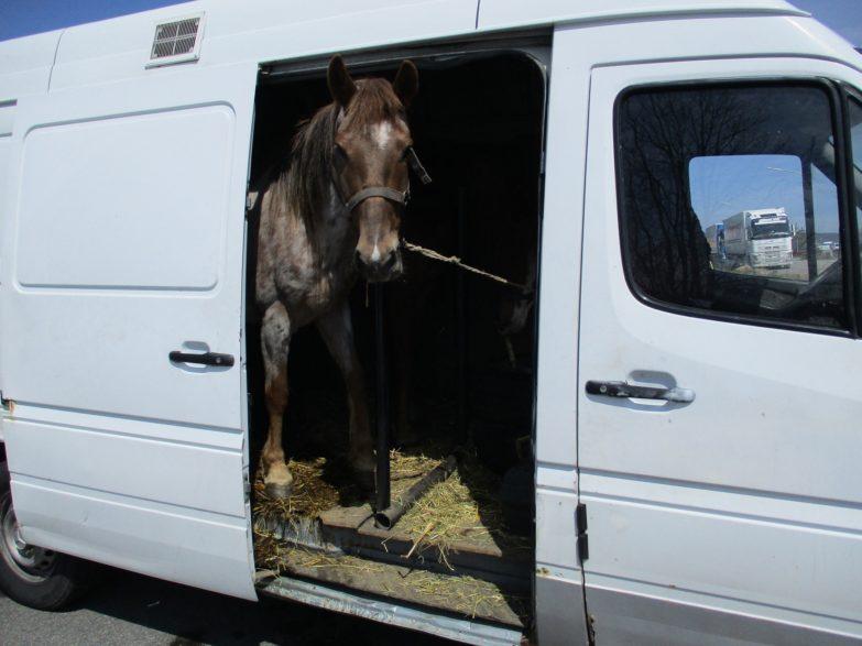 Pferd im Kastenwagen