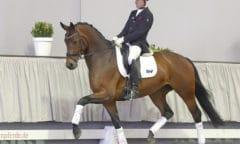 Beliebtestes Dressurpferd Nr. 10 Anna von Schlotterstein v. Apollon/Fürst Grandios