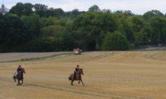 Ausreiten bedeutet für viele Reiter einfach mal die Seele baumeln lassen. Damit der entspannte Ausflug auch einer bleibt, gilt es bestimmte Dinge zu beachten