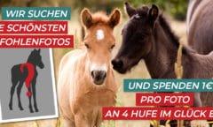 Fotowettbewerb mit Spendenaktion für die Rettung von Schlachtfohlen