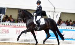 Verden verbreitet im August wieder WM-Flair mit den Weltmeisterschaften der Jungen Dressurpferde. Hier Isabell Freese mit For Cruise. (Foto: Rüchel)