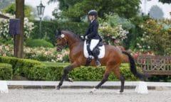 Einziges Pony in der Reitpferdeprüfung und Sieger - Krösus mit Larissa Höhne. (Foto: Stefan Lafrentz)
