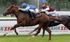 Quebueno gewann erst am 6. Juni sein erstes Rennen in Mülheim mit Lukas Delozier. Jetzt folgte der Überraschungstriumpf in Hannover mit Jozef Bojko. (Foto: Galoppfoto.de/ Sorge)