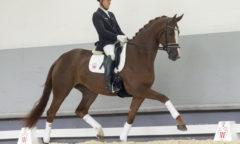 Teuerstes Pferd der Auktion war Nr. 4 Diamonique v. Don Nobless/Laudabilis Bildnachweis: Reckimedia