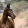 Marwaris – Ein Königreich für ein Pferd